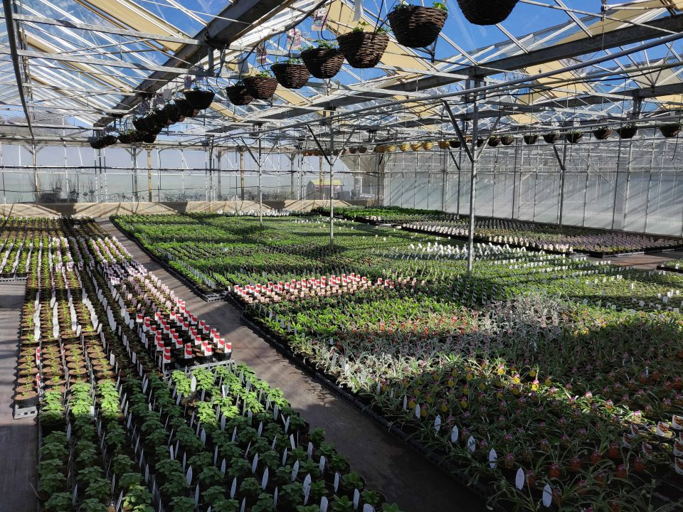 Production Nursery Glasshouse at Coolings Gardener's Garden Centre, Knockholt