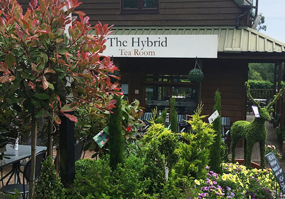 The Hybrid Tea Room