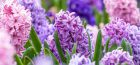 What to do in the Garden: March