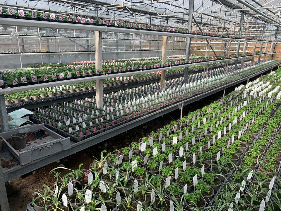 Preparing for Spring and Summer on the nursery nuturing our young plants