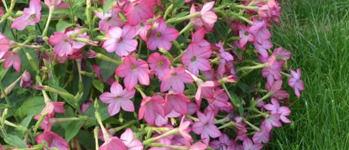 Featured image for 'Tips on Planting Baskets with Beautiful Bedding'