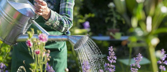 Featured image for 'Gardening for Wellbeing'